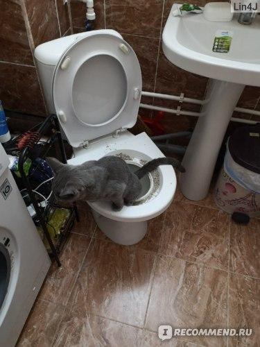 Система приучения кошки к унитазу Альтернатива М5998 фото