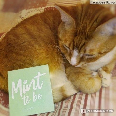 миниатюрность палетки в сравнении с котиком