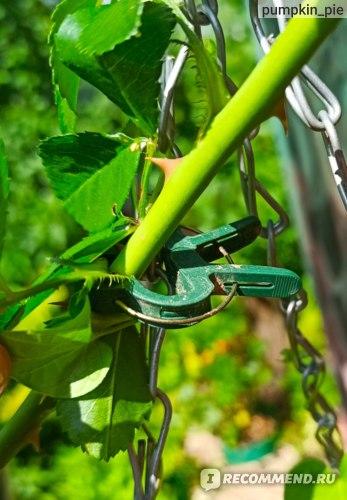клипсы для подвязки растений отзывы