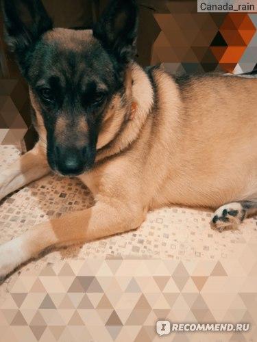 Консервы для собак Ем без проблем Говядина с рубцом и печенью  фото