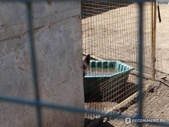 Муниципальный приют для бездомных собак «Красная сосна», Москва фото