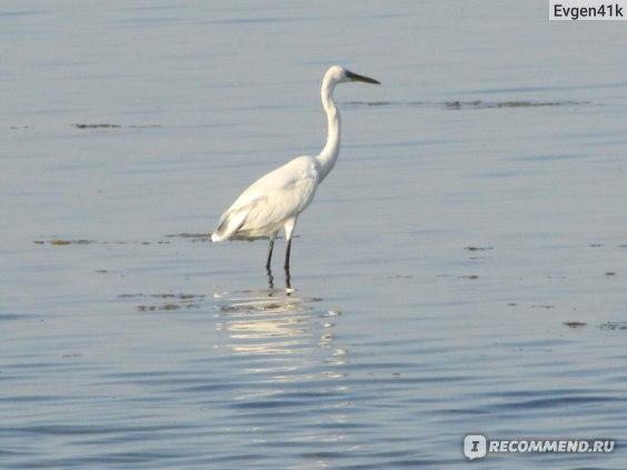 Calimera royal albatros moderna 5*, Египет, Шарм-эль-Шейх фото