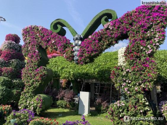 Дубай сад цветов как добраться на метро покупка недвижимости в болгарии для иностранцев