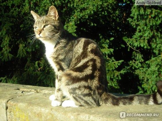 Кошка жмурится на солнце
