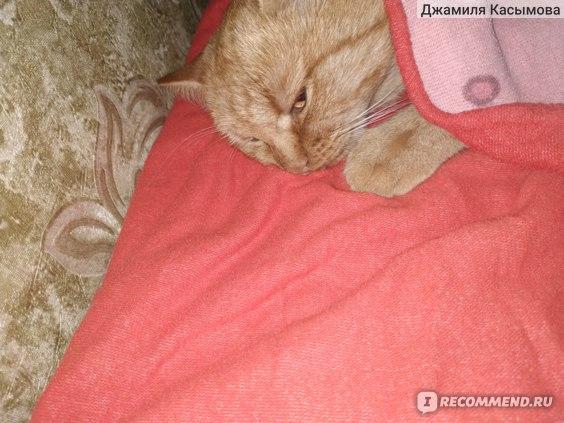 Кошка дремает