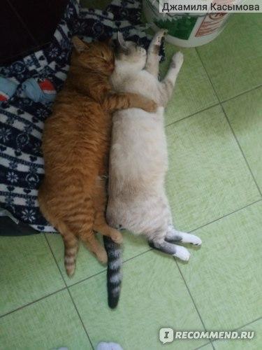 Вот так детки спят