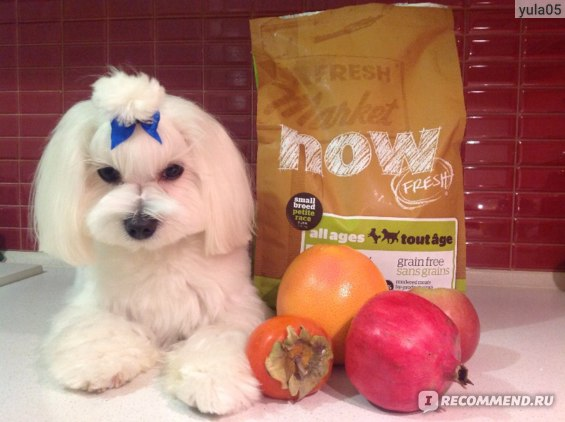 Корма для собак now fresh отзывы