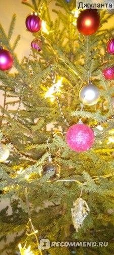 Ель живая Новогодняя срезанная фото