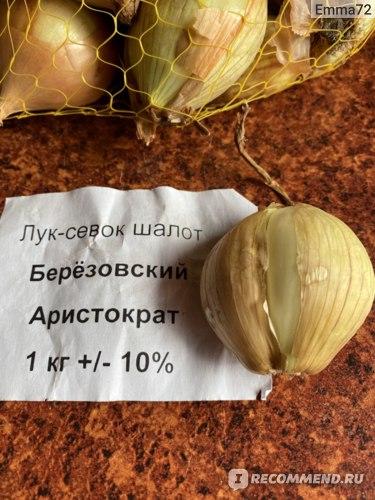 Лук Березовский Аристократ  шалот фото