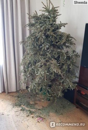 Мартовская елка без прикрас