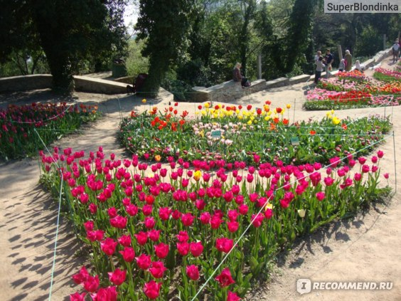 Крым, Никитский Ботанический Сад фото