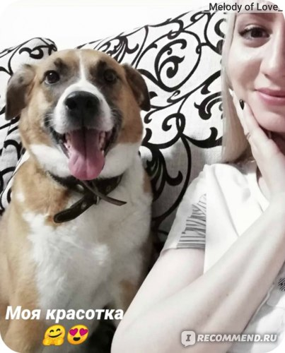 Беспородные собаки (Дворняжки) и Метисы фото
