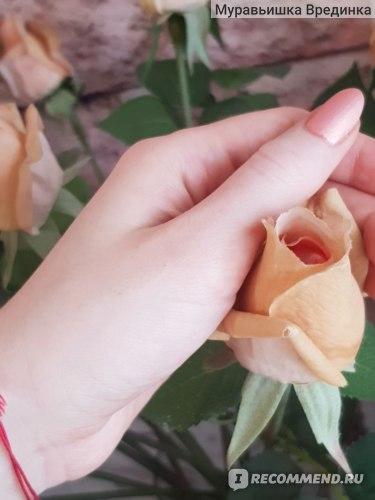 Натуральное крем-масло для рук ECOCRAFT «Мандарин и розовый перец» фото