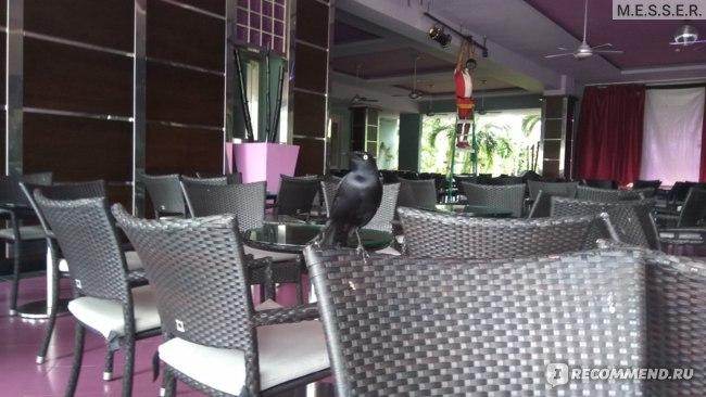 Птицы не стесняются подлетать к вас во время еды и просить их угостить