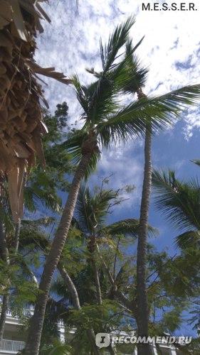 Пальмы, пальмы, пальмы. Везде пальмы