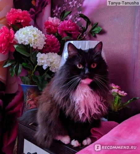 Отзывы о сибирской кошке