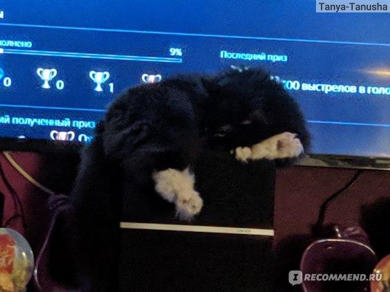 Уход за кошкой отзывы