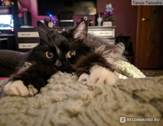 Какую породу кошек выбрать при наличии аллергии