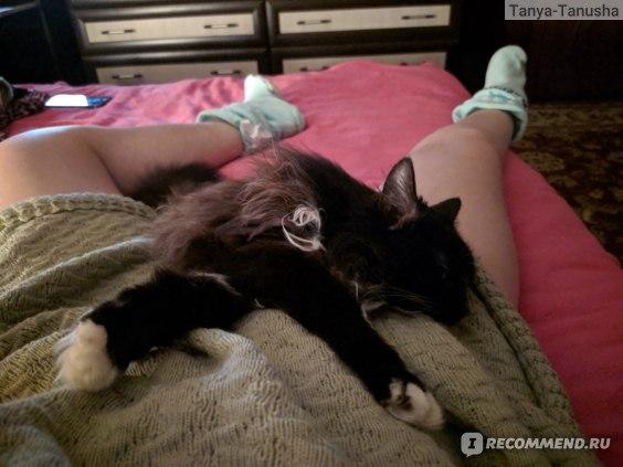 Забавные фото с кошками