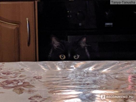 Много ли шерсти от кошки