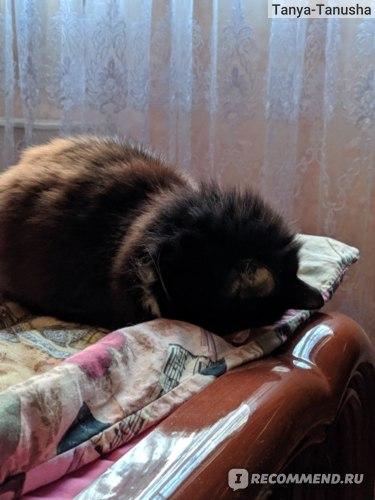 Умная сибирская кошка