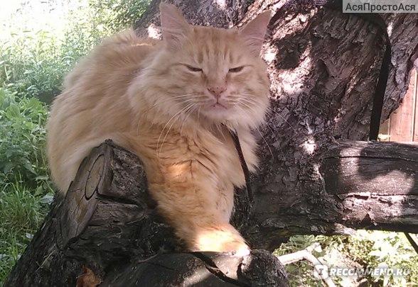 Капли от блох и клещей RolfClub 3D для кошек весом более 4 кг фото