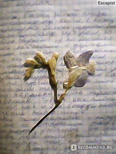 Пример фото, текст и цветок