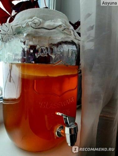 Народное средство  Чайный гриб фото