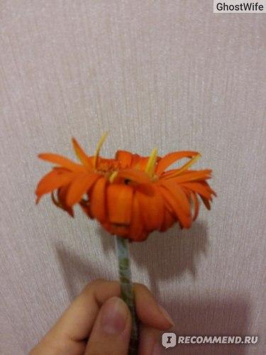 Сайт доставки цветов dostavk-in.ru фото