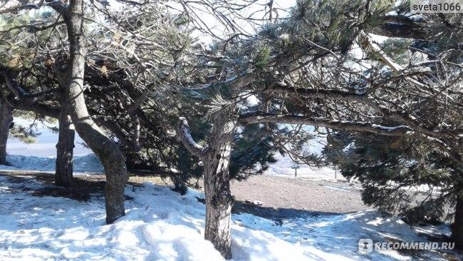 Необычные деревья на горе Машук
