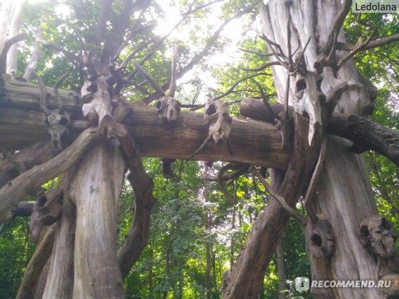 Никола-Ленивец - арт-парк, Калужская область фото