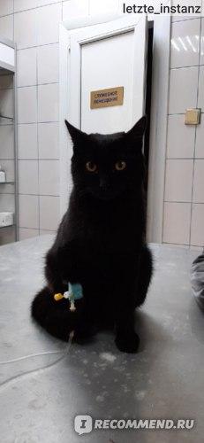 последнее фото Кота