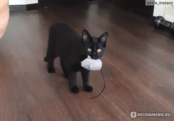мышку будешь? Сам поймал