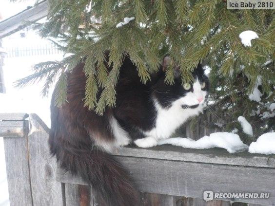 Наполнитель для кошачьего туалета Fix Price древесный Мяу фото