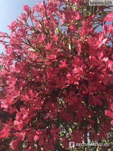 Таким цветами усыпан весь Мармарис!