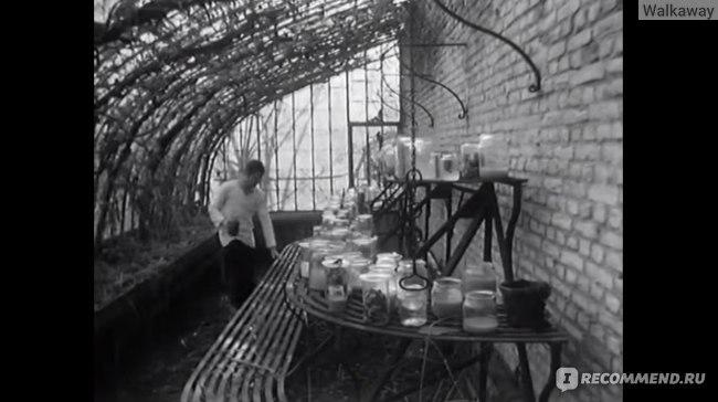 Свадебная ваза / Vase de noces (1974, фильм) фото