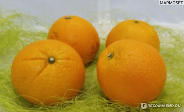 Фрукты Апельсин  фото