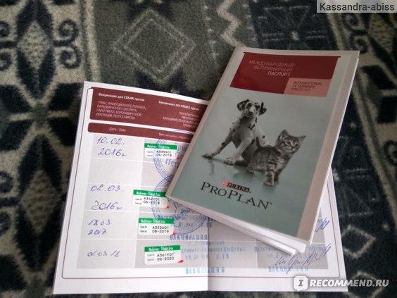 Лабораторная диагностика инфекционных заболеваний у животных фото