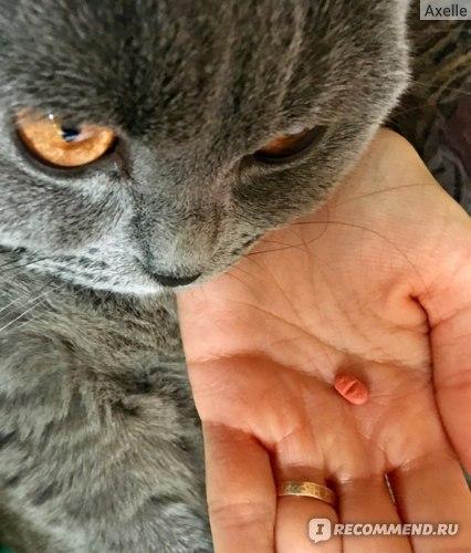Мильбемакс инструкция для кошек