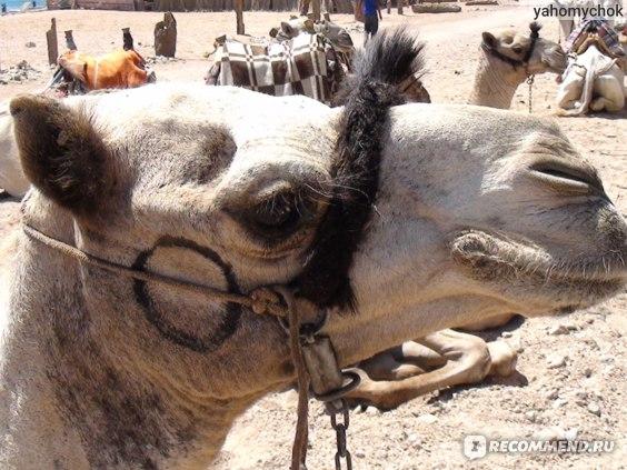 """Египет. Шарм-эль-Шейх. Экскурсия """"Давай Дахаб"""" фото"""