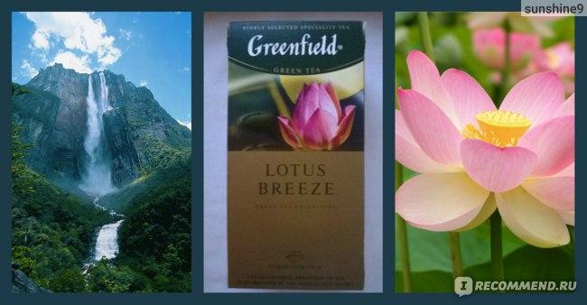 Чай  Гринфилд (Greenfield) Lotus Breeze фото