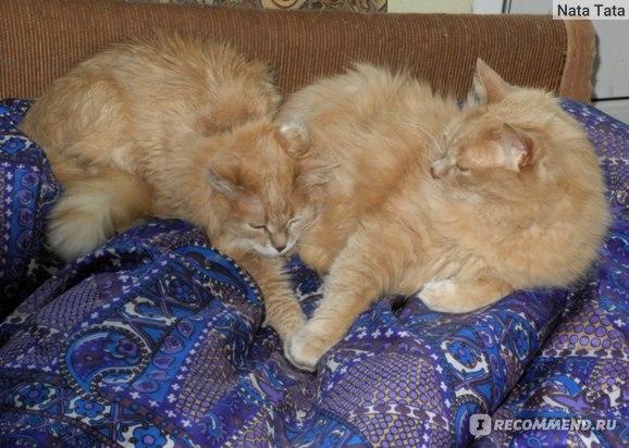 Кишки бараньи для кошек TitBit фото