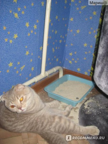 Наполнитель для кошачьего туалета Ашан впитывающий  фото