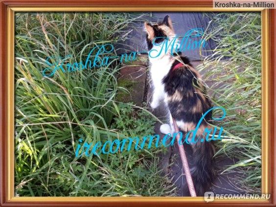 Samsung Galaxy Tab S 10.5 SM-T805 16Gb пример фото наглая кошка