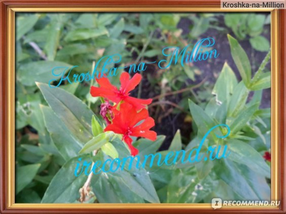 Samsung Galaxy Tab S 10.5 SM-T805 16Gb пример фото цветок