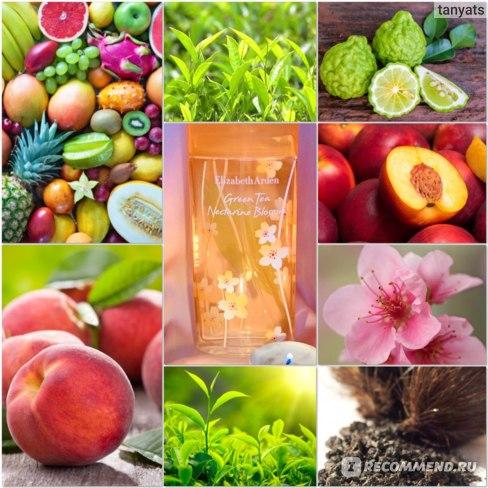 Elizabeth Arden Green Tea Nectarine Blossom - пирамида композиции