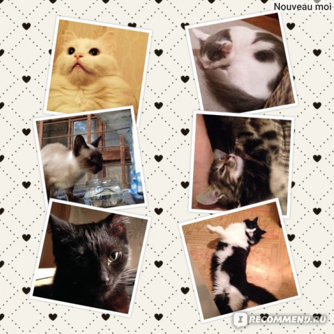 Наполнитель для кошачьего туалета Kotix силикагелевый фото