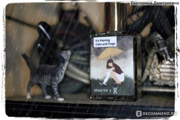 Demeter Котик боится грозы / «It's raining cats and dogs» фото