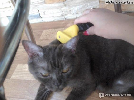 Маргуне очень нравится эта процедура, она даже глаза закатывает)))