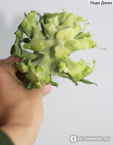 Овощи   Брокколи фото